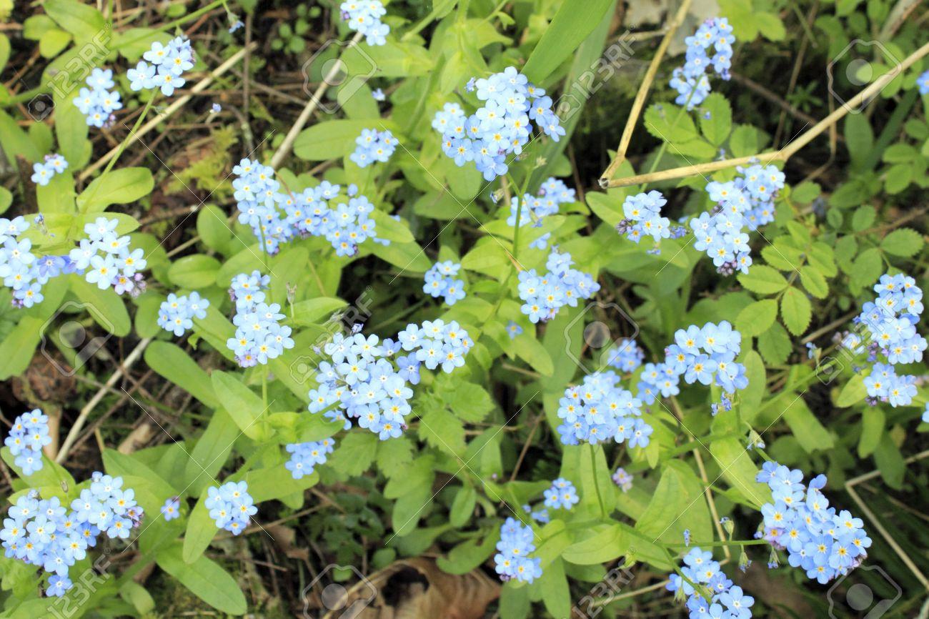 tiny blue five petal