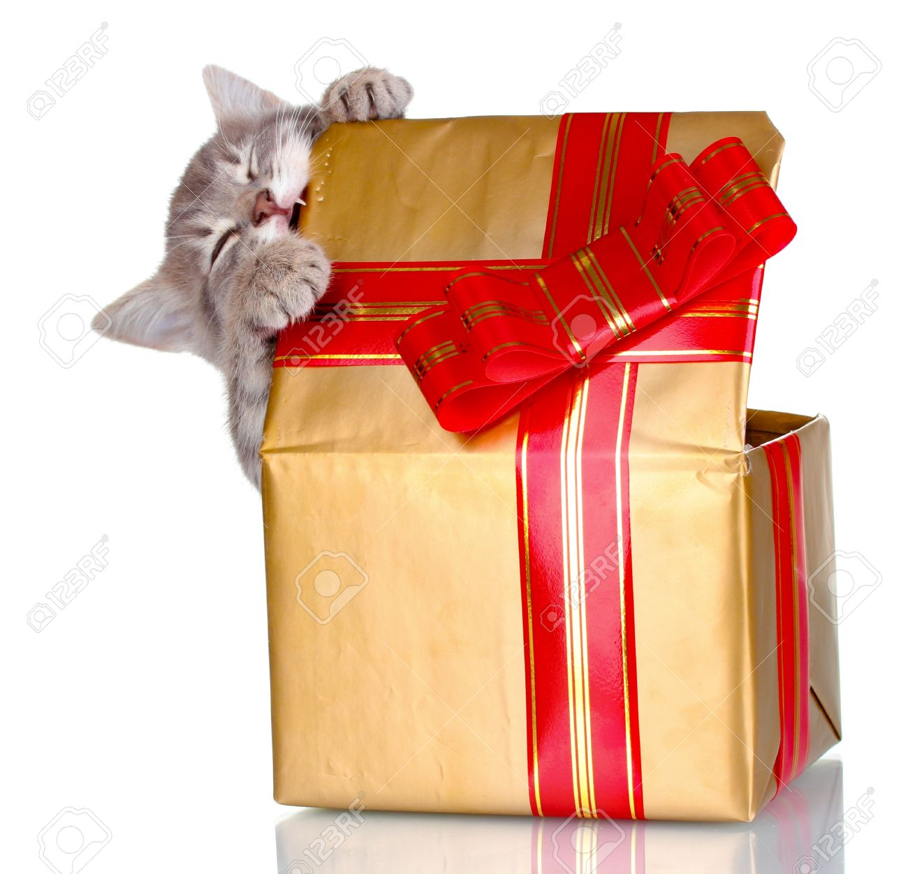 Image result for cat gifts