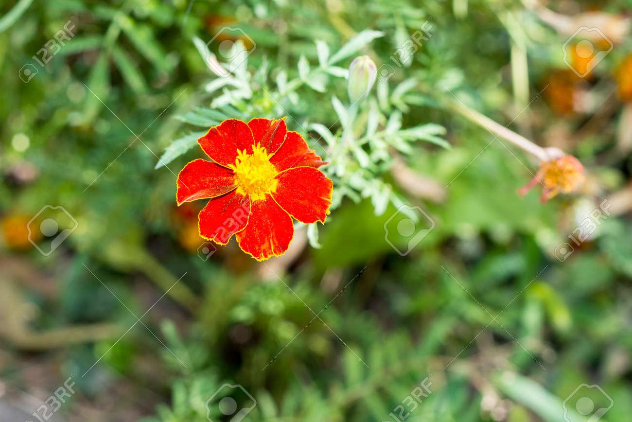 https www 123rf com photo 53724490 fresh flowers over green grass background chernobrivtsev bloom in the garden flower bed decoration f html