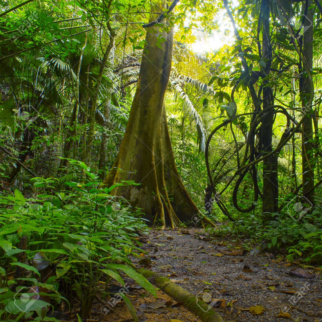 Theme from the top brands. Jungle Forest With Tropical Trees Adventure Background Stock Photo Picture And Royalty Free Image Image 16006485