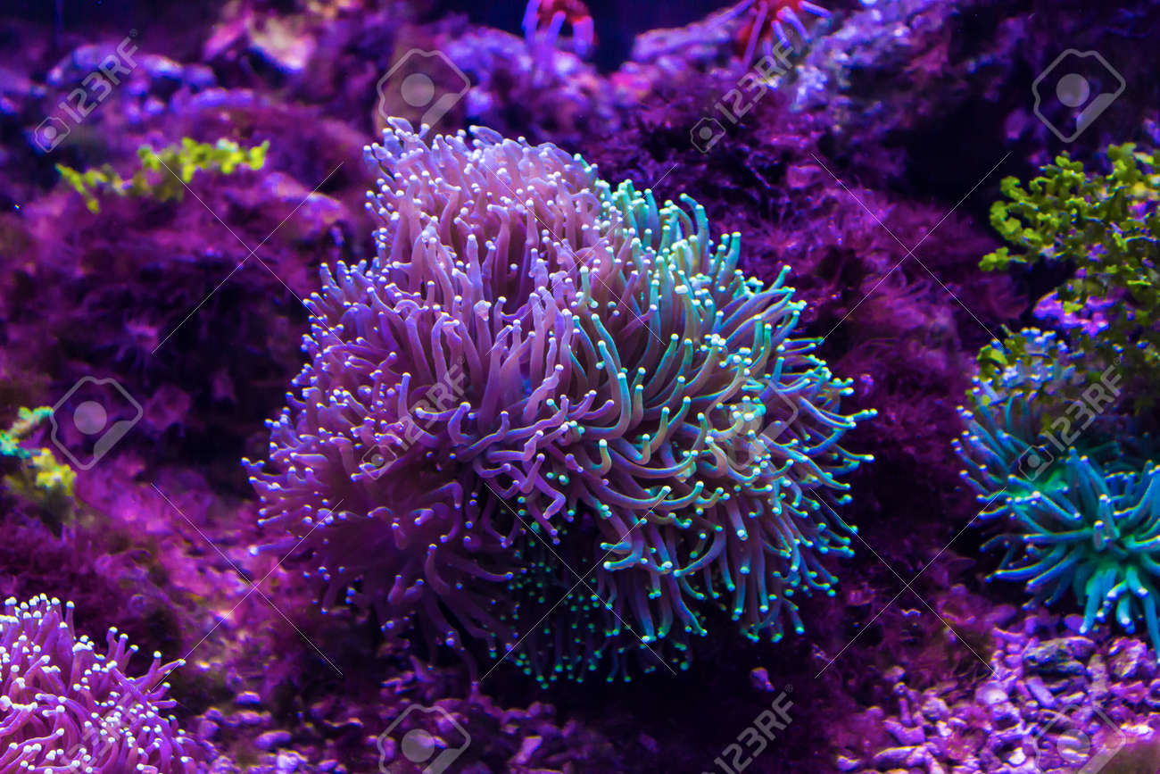 tropical sea anemone in