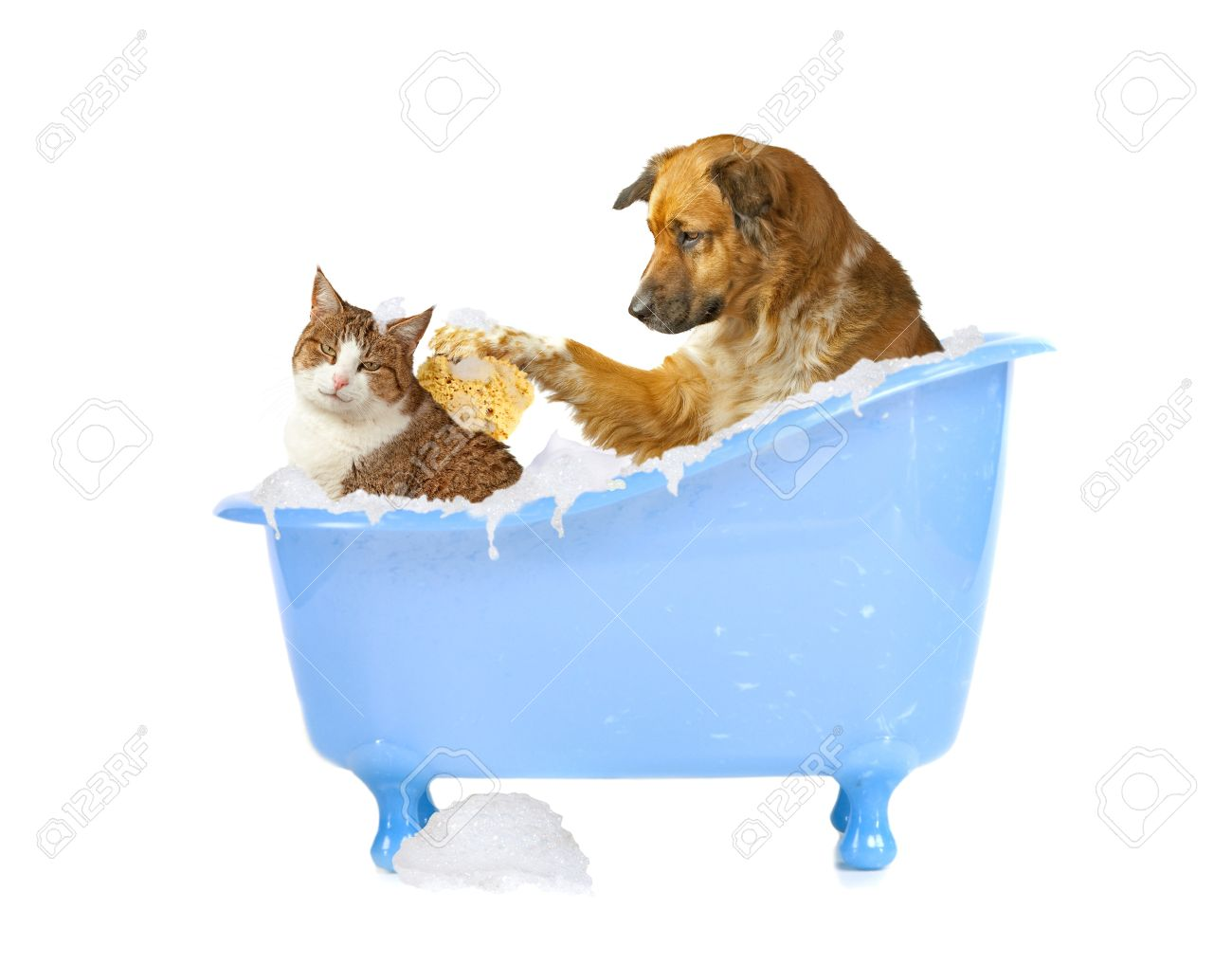 cat lick dog and