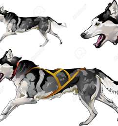 running sled dog of siberian husky breed stock vector 87930858 [ 1300 x 1122 Pixel ]