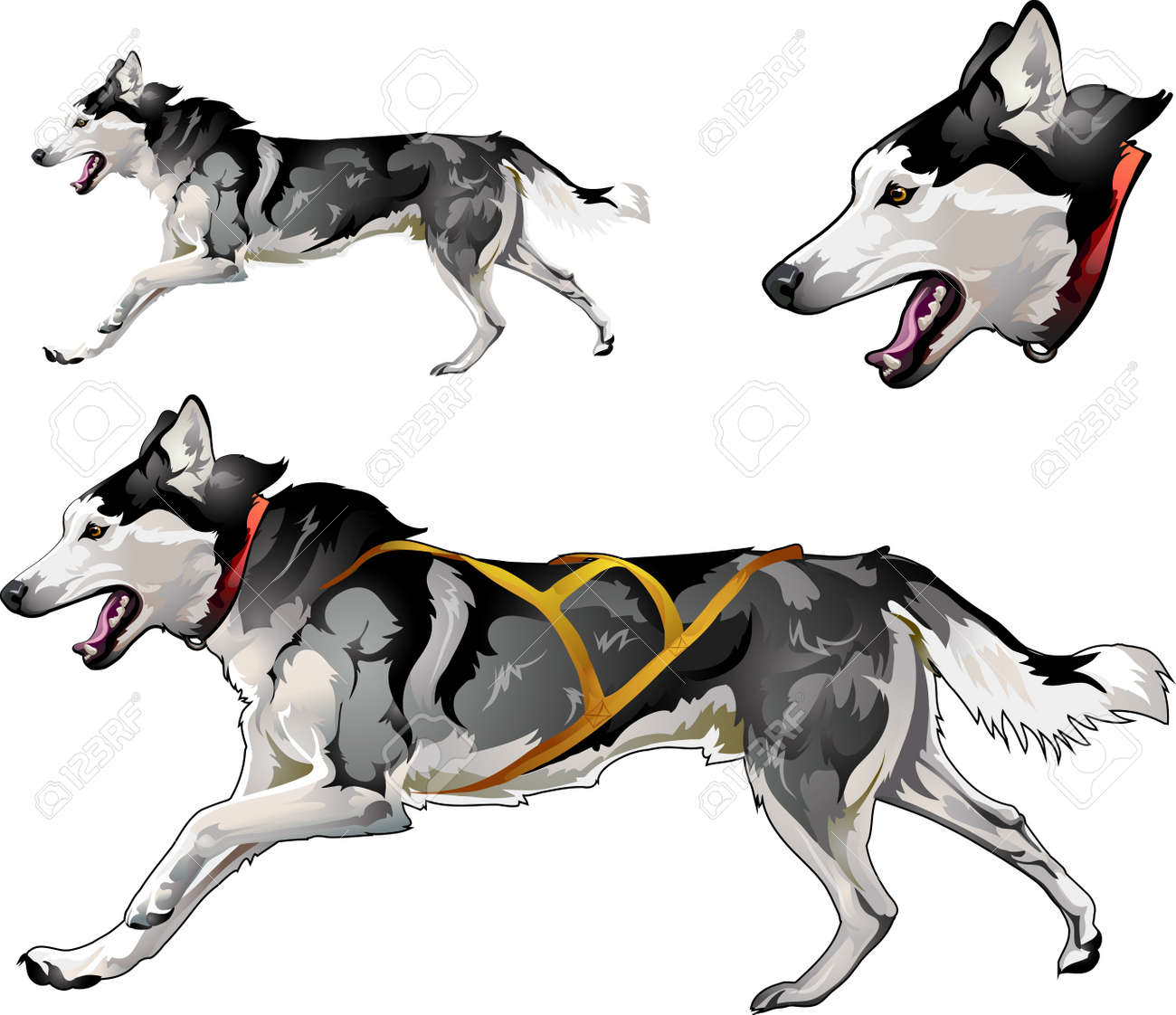hight resolution of running sled dog of siberian husky breed stock vector 87930858