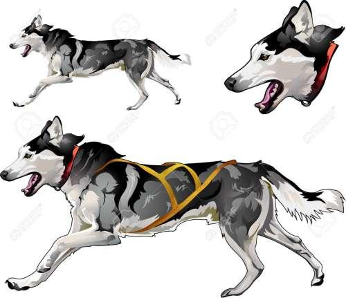 small resolution of running sled dog of siberian husky breed stock vector 87930858