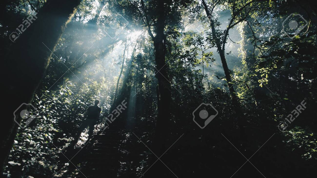 Browse photos and explore incredible landscape designs and features on hgtvremodels. Beautiful Landscape Of Wild African Nature Forest In Sunny Bright Stock Photo Picture And Royalty Free Image Image 119025567