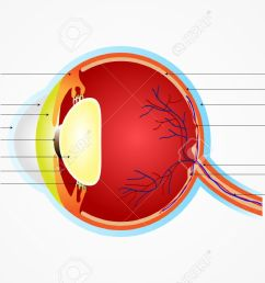 vector vector illustration of diagram of eye anatomy with label [ 1300 x 866 Pixel ]