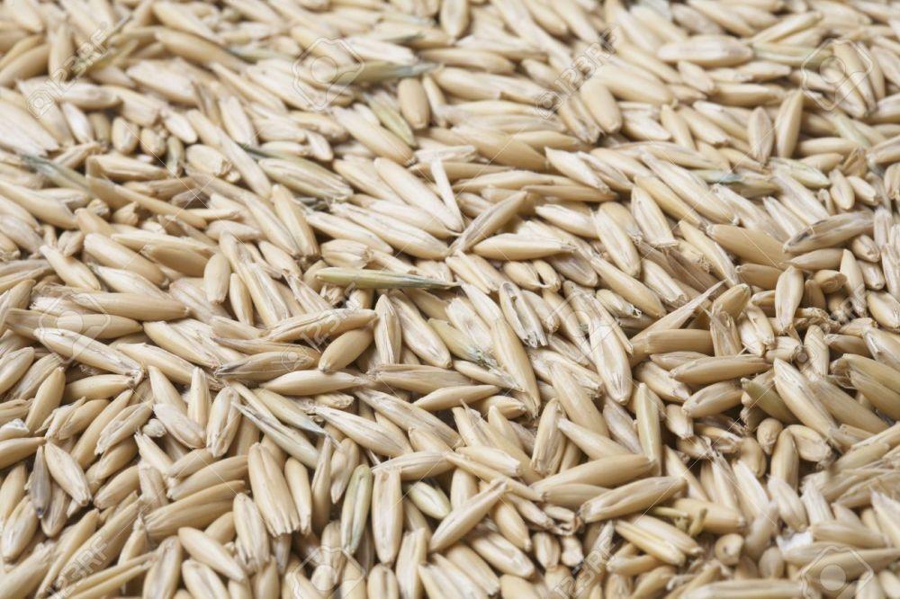 medium resolution of oat grain with husks in closeup stock photo 3503470