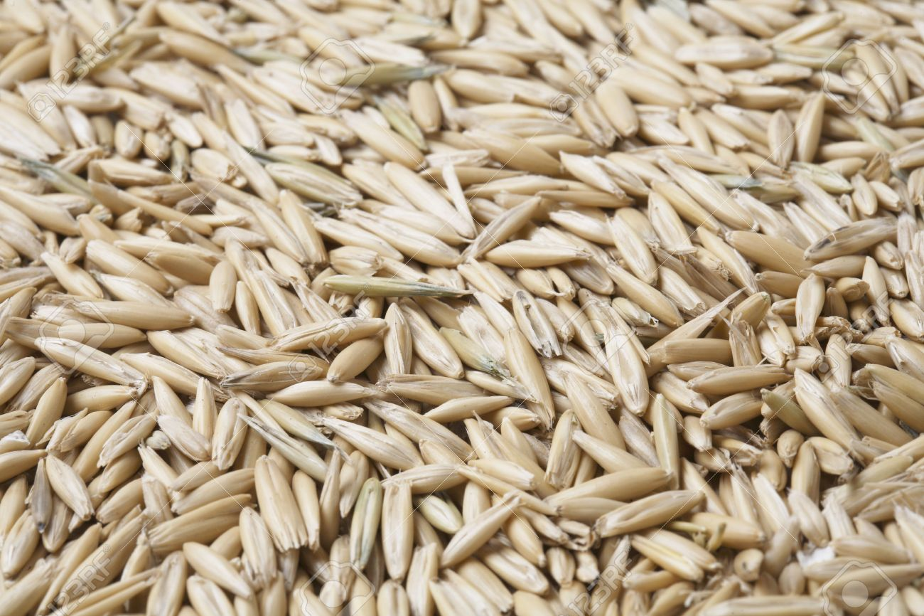 hight resolution of oat grain with husks in closeup stock photo 3503470