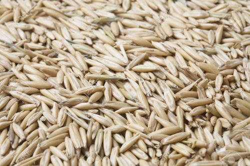 small resolution of oat grain with husks in closeup stock photo 3503470