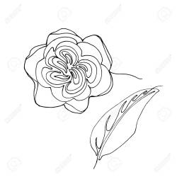 Hand Drawn Minimalistic Garden Juliet Rose Flower One Single Royalty Free Cliparts Vectors And Stock Illustration Image 120520402