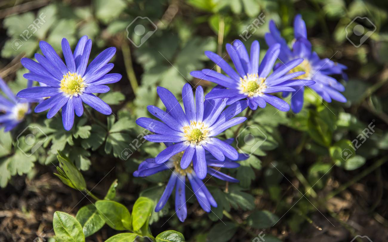 six blue flowers with