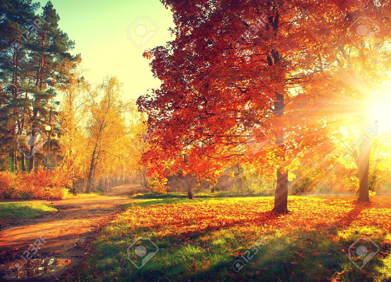 autumn scene fall trees