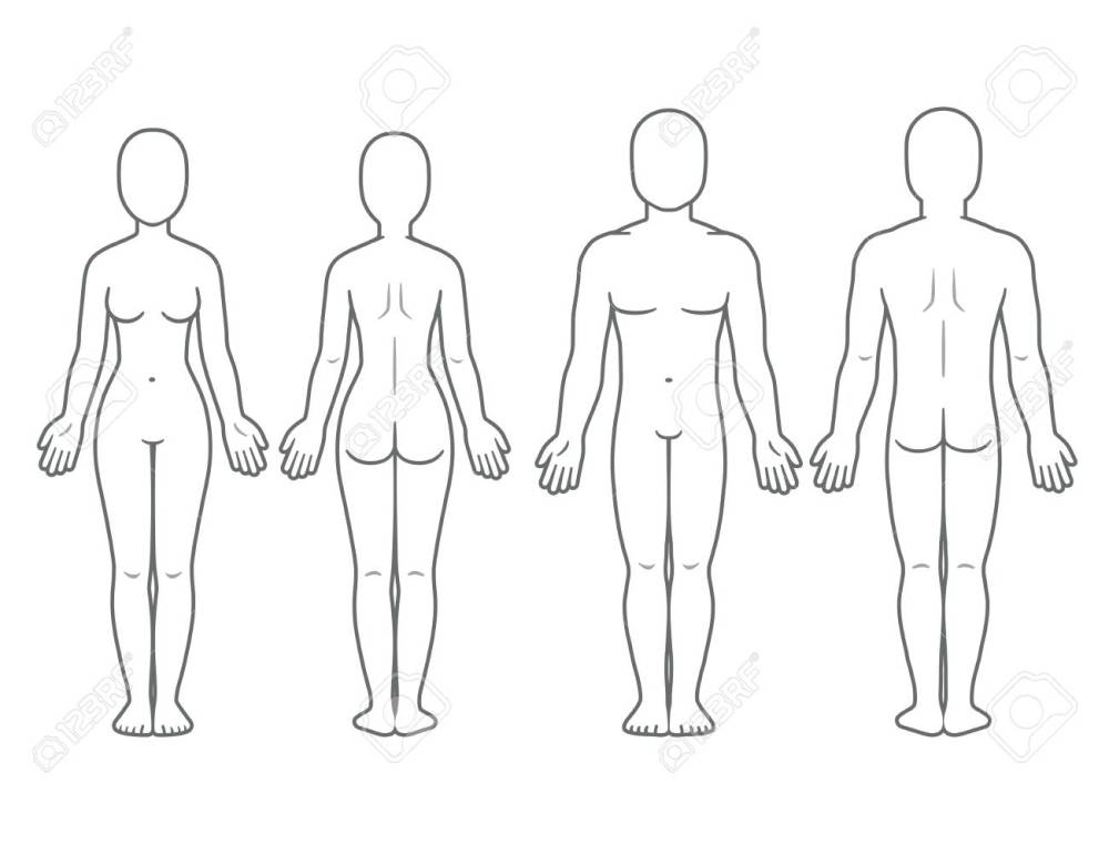 medium resolution of male and female body front and back view blank human body template for medical infographic