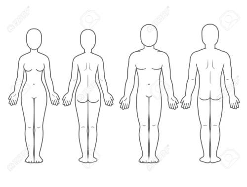 small resolution of male and female body front and back view blank human body template for medical infographic