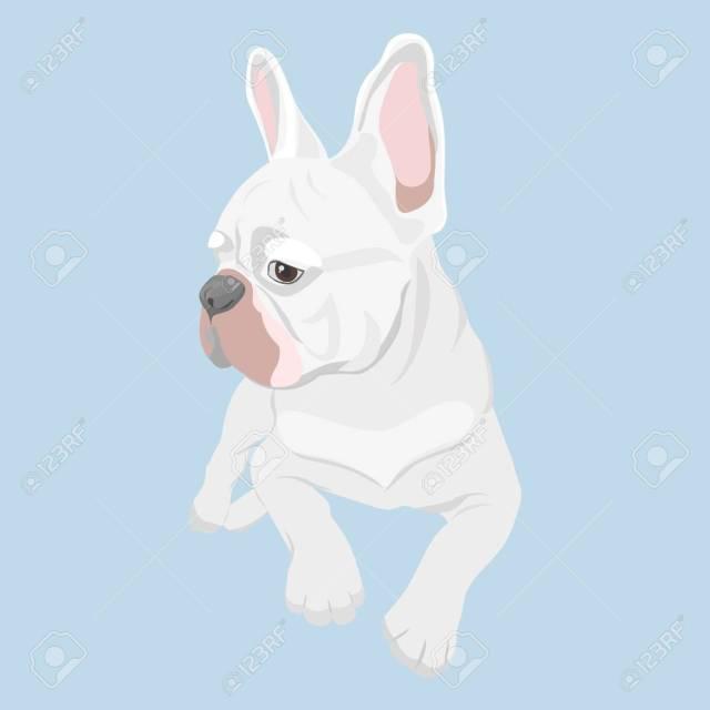 white french bulldog lying isolated on baby blue background