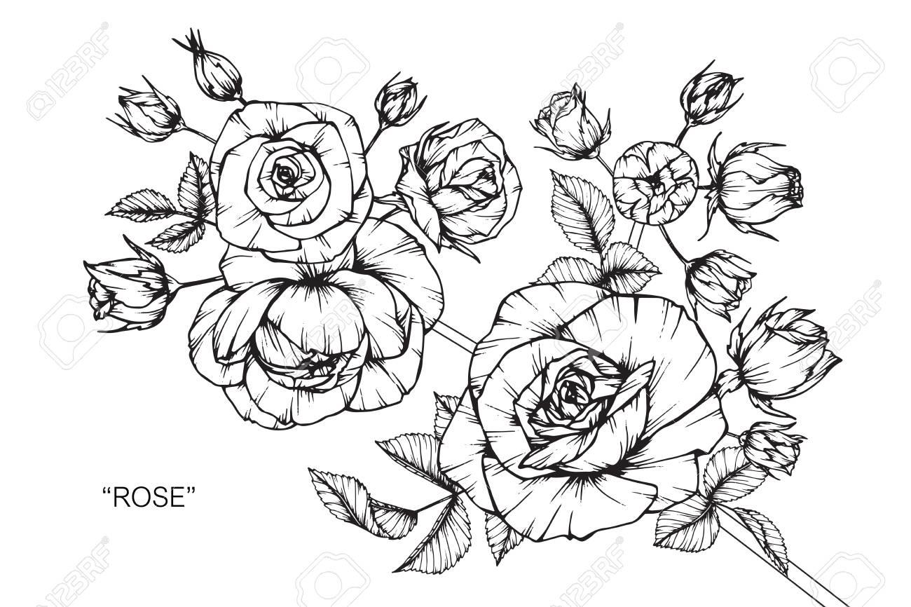 Zeichnen Anleitung Rose