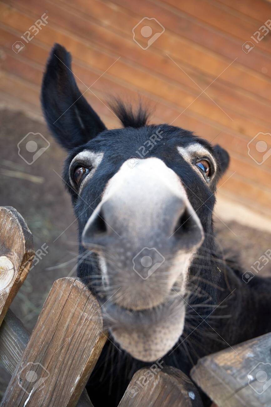 Funny Contact Pictures : funny, contact, pictures, Funny, Muzzle, Donkey, Appealingly, Looking, Behind, Contact.., Stock, Photo,, Picture, Royalty, Image., Image, 130697143.