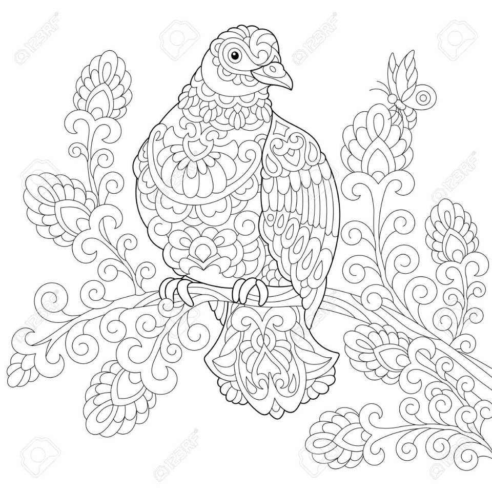 ハト (ピジョン) 鳥のぬりえ。フリーハンド スケッチ落書きと zentangle