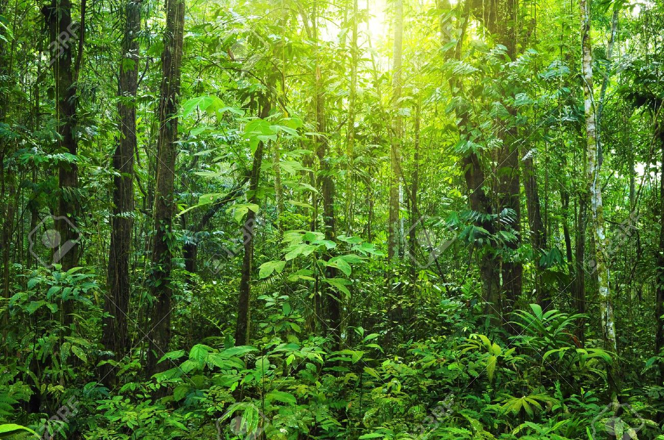Huge collection, amazing choice, 100+ million high quality, affordable rf and rm images. Tropical Dense Forest With Morning Sunlight Shine On To It Stock Photo Picture And Royalty Free Image Image 5738493