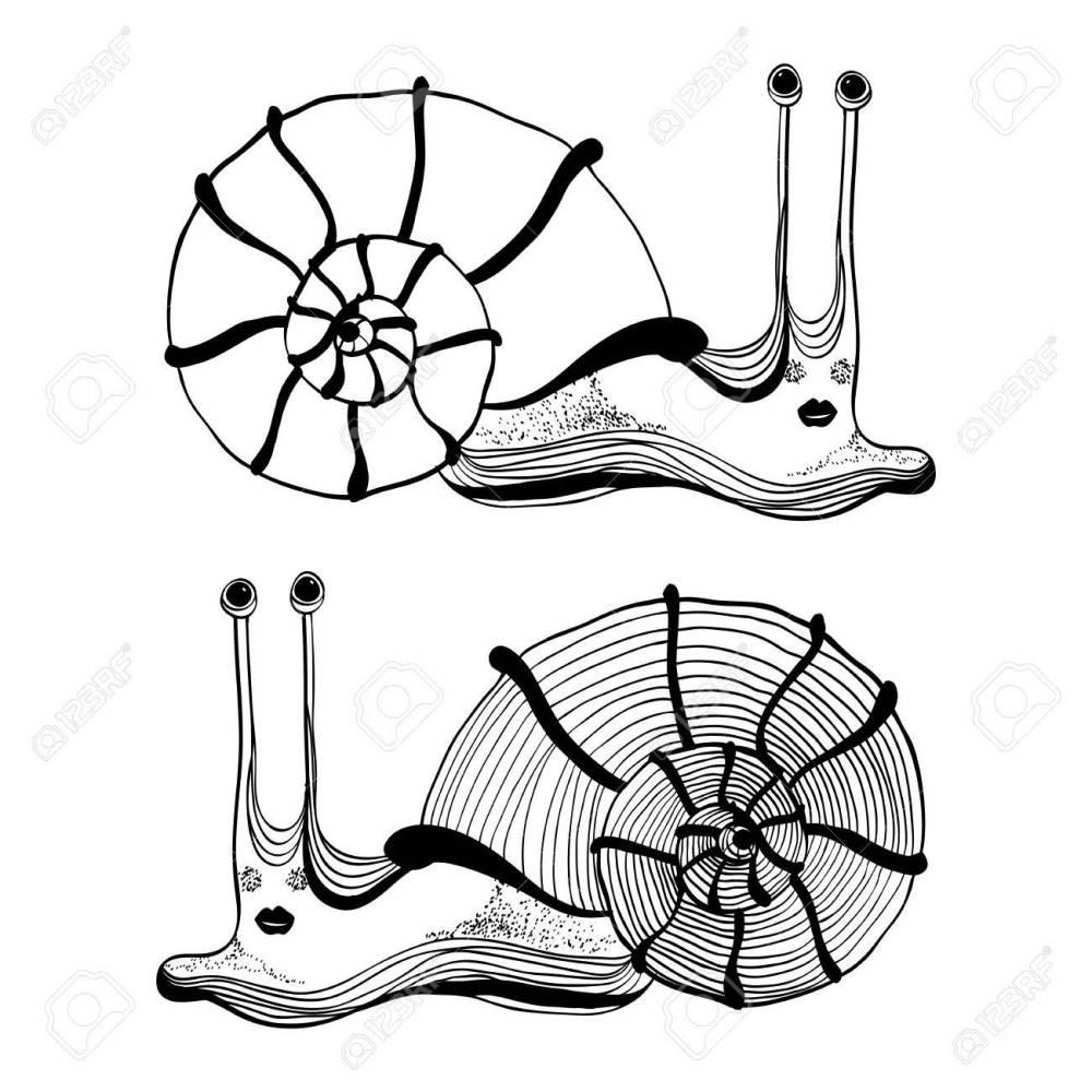 medium resolution of cartoon drawing of cute funny snail stock vector 19079987