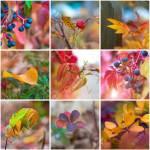 Makrofotos Von Bunte Blatter Im Herbst Collage Lizenzfreie Fotos Bilder Und Stock Fotografie Image 33206070