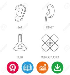 lab bulb medical plaster and ear icons kidney linear sign award medal  [ 1300 x 1300 Pixel ]