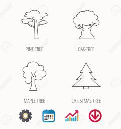 pine tree maple and oak tree icons forest trees linear signspine tree maple and [ 1300 x 1300 Pixel ]