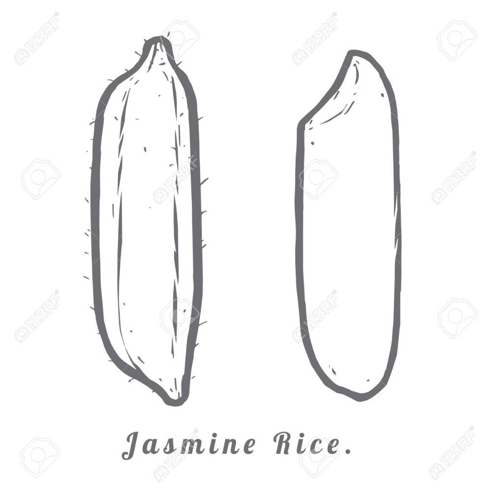 medium resolution of thailand seeds jasmine rice hull and rice macro closeup by sketch stock vector