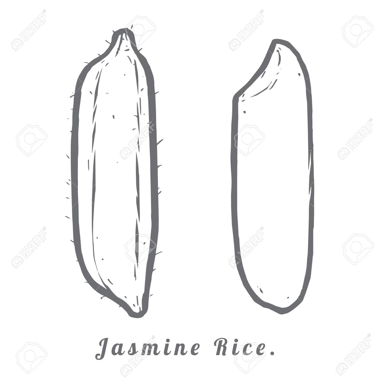 hight resolution of thailand seeds jasmine rice hull and rice macro closeup by sketch stock vector