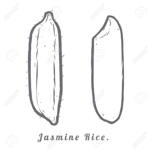 small resolution of thailand seeds jasmine rice hull and rice macro closeup by sketch stock vector