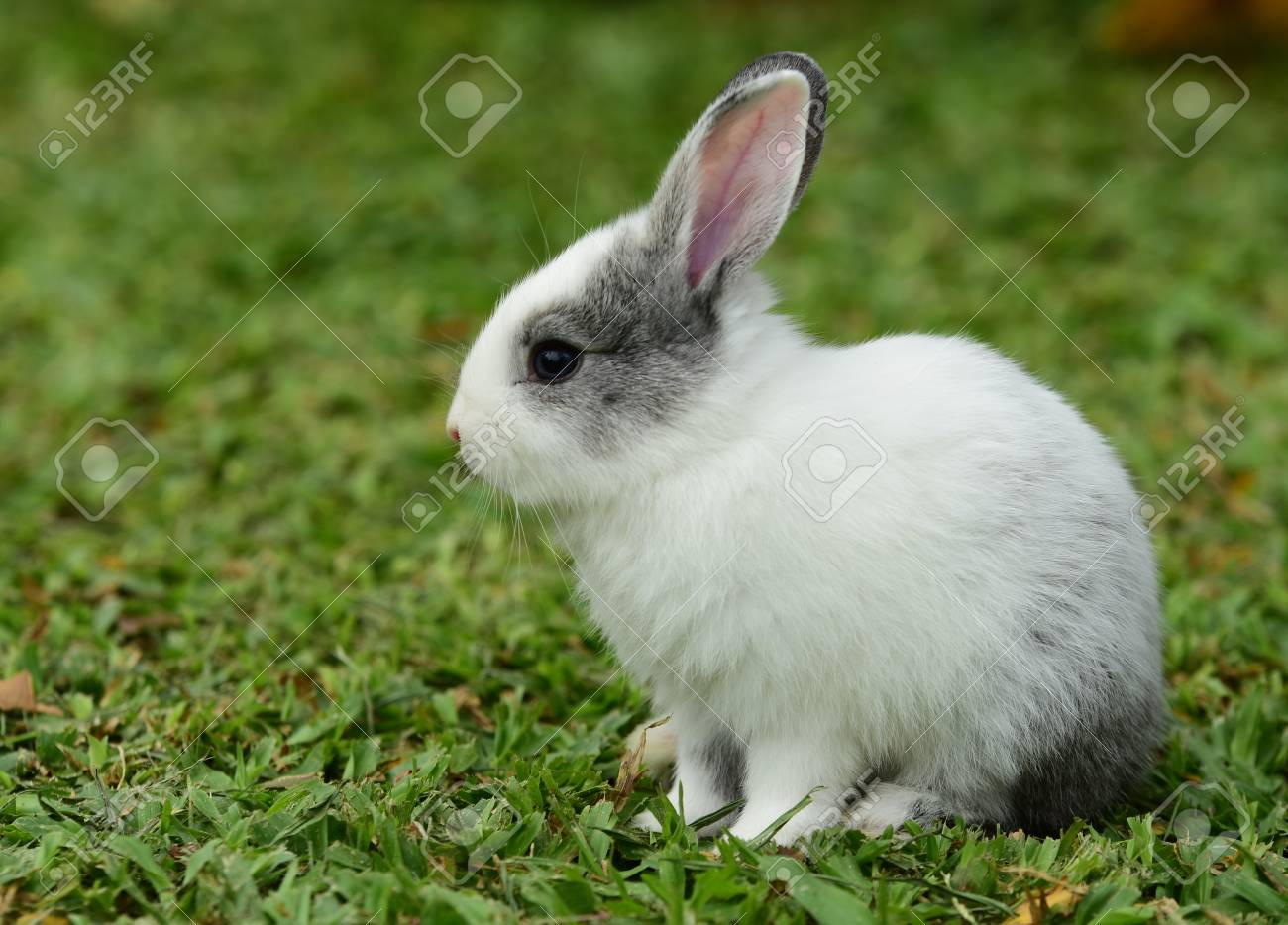 cute rabbit brown and