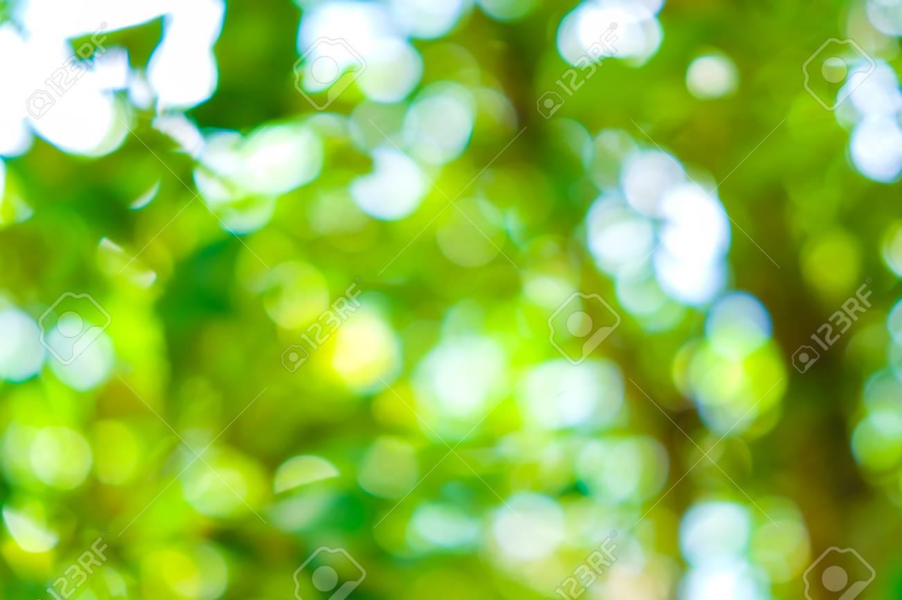 blurred natural green scene