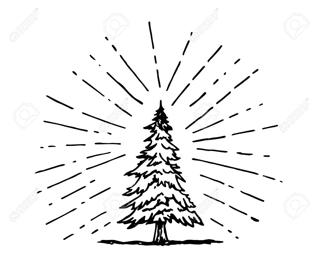 pine tree drawing in