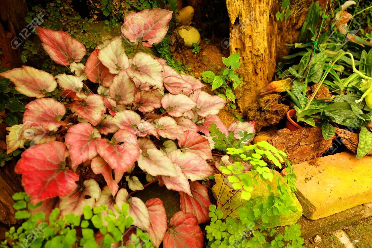 Schöne Pflanzen Für Den Garten 21 Tipps Die Ihren Garten Sofort