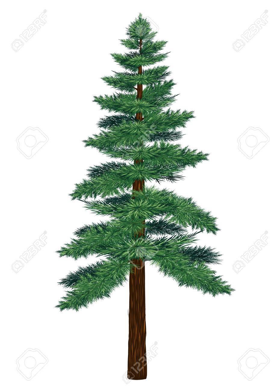 pine tree vector on