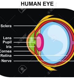 vector human eye cross section including eye parts sclera lens pupil iris cornea retina optic nerve [ 1300 x 958 Pixel ]