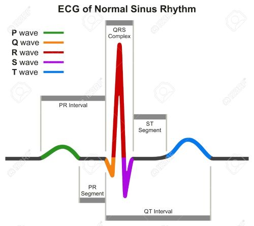 small resolution of ecg of normal sinus rhythm infographic diagram showing normal heart beat wave including intervals segments and