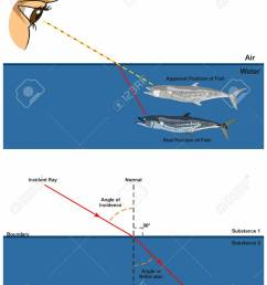 refraction of light infographic diagram with an example of human eye looking into fish in water [ 954 x 1300 Pixel ]
