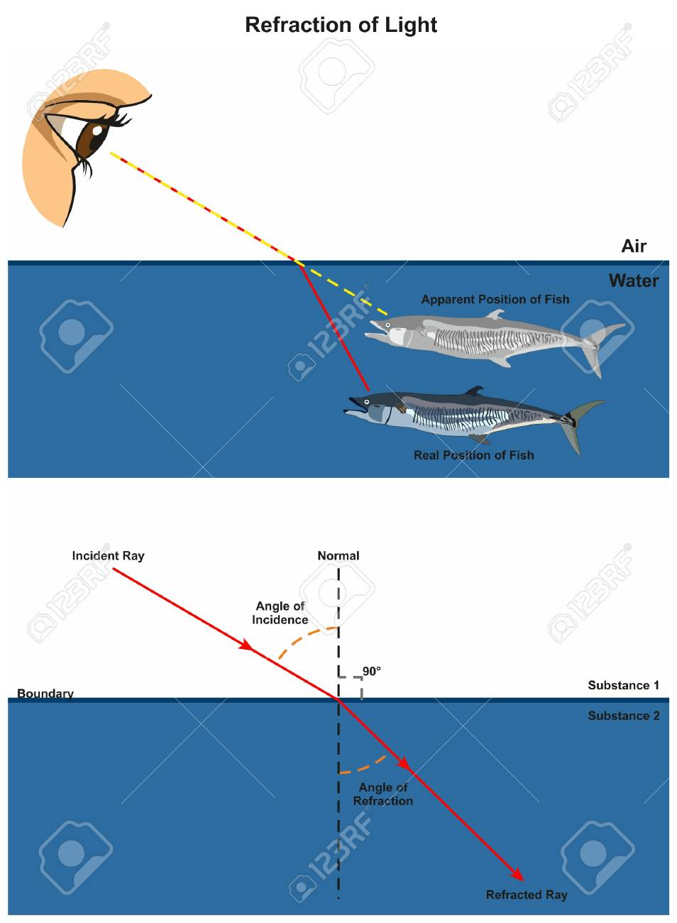 hight resolution of refraction of light infographic diagram with an example of human eye looking into fish in water