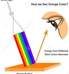how we see orange color infographic diagram showing visible spectrum light on surface and colors reflected [ 1168 x 1300 Pixel ]