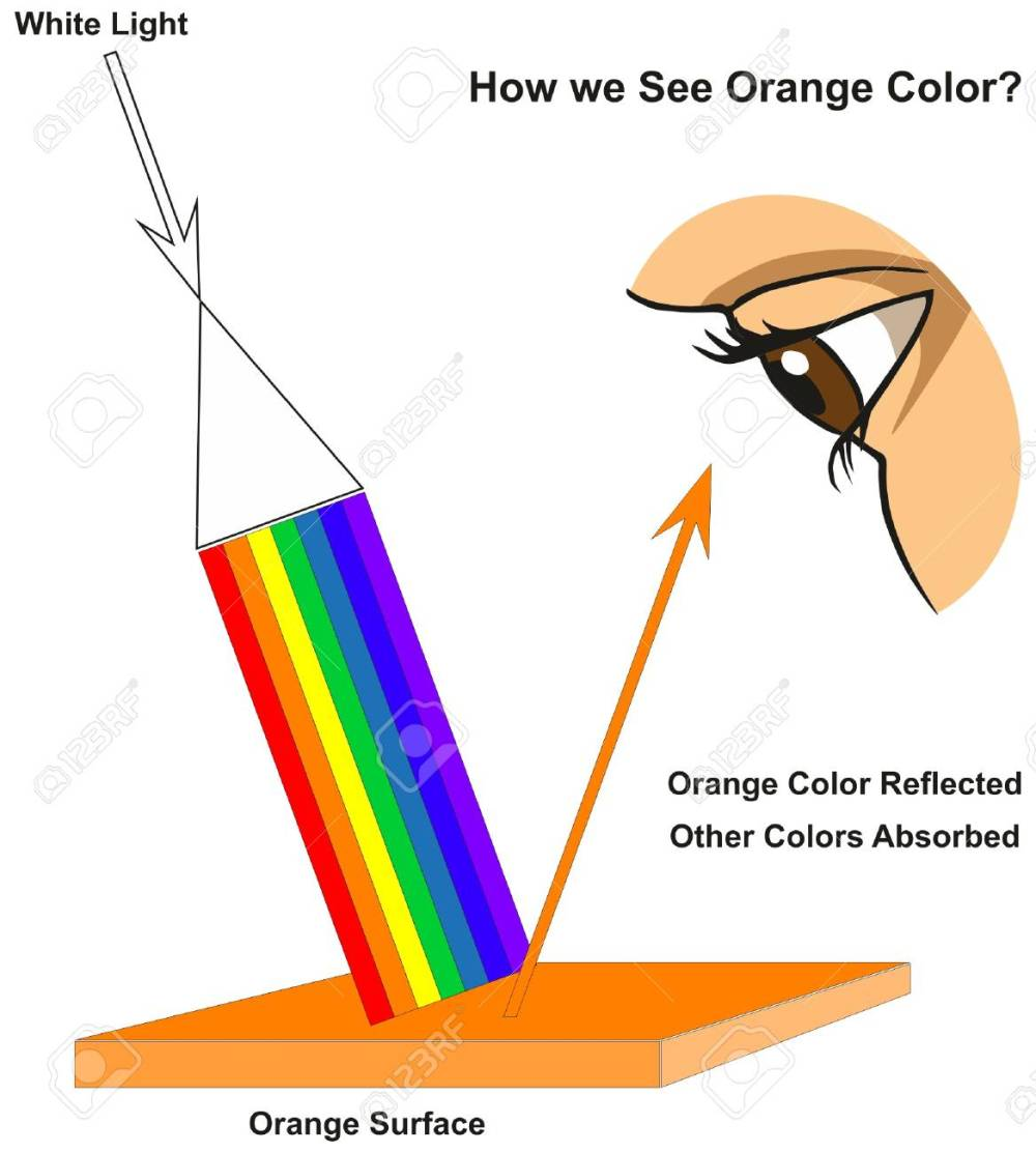 medium resolution of how we see orange color infographic diagram showing visible spectrum light on surface and colors reflected