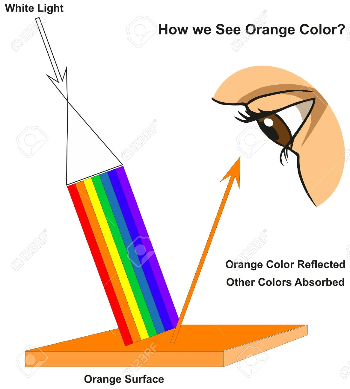 hight resolution of how we see orange color infographic diagram showing visible spectrum light on surface and colors reflected
