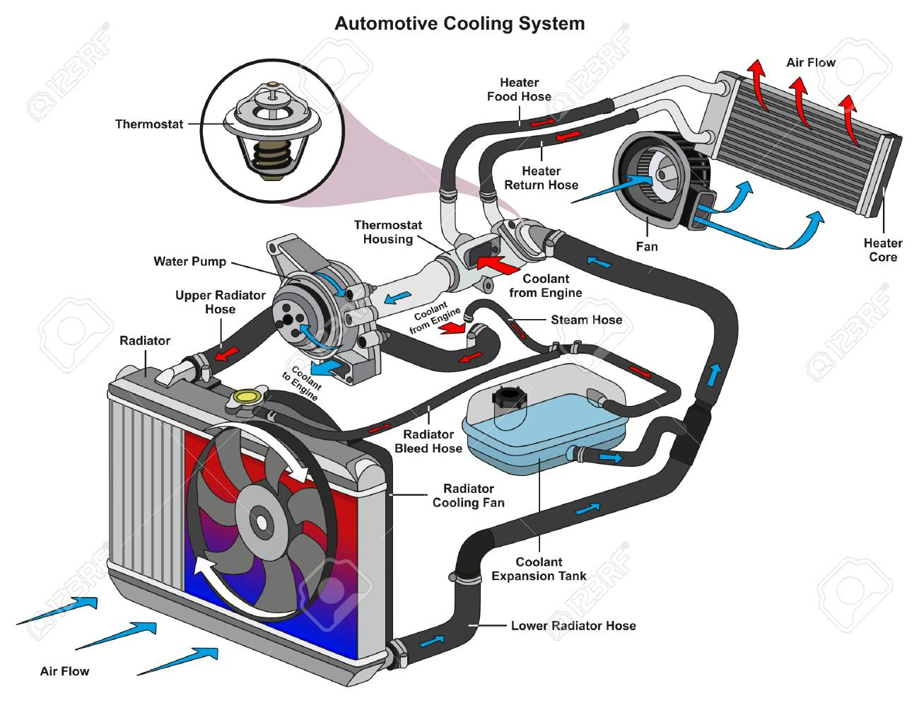 hight resolution of automotive cooling system infographic diagram showing process car heater hose diagram automotive cooling system infographic diagram