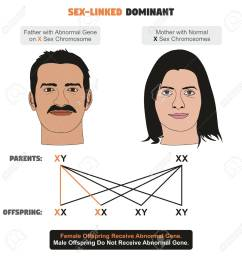 sex linked dominant hereditary trait infographic diagram showing father with abnormal gene on x sex [ 1274 x 1300 Pixel ]
