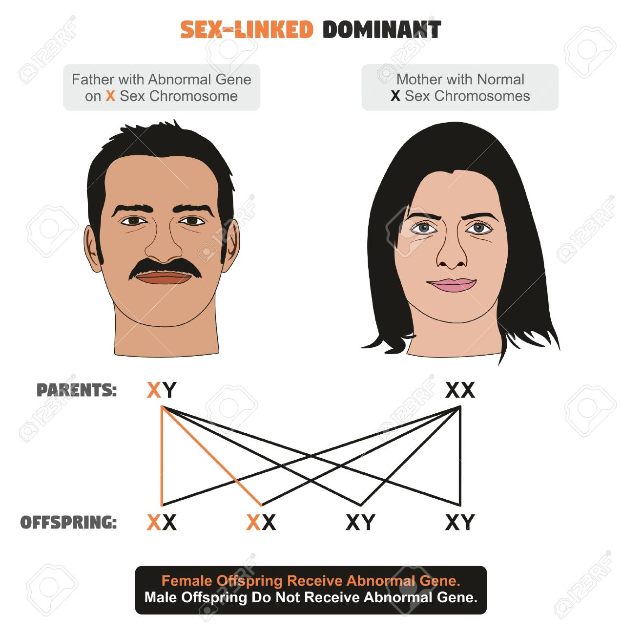 hight resolution of sex linked dominant hereditary trait infographic diagram showing father with abnormal gene on x sex