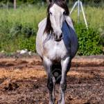 Photo Picture Of Beautiful Horse On A Farm Stock Photo Picture And Royalty Free Image Image 122392594