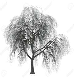 3d illustration of a weeping willow or sallow or osier isolated on white background stock photo [ 1300 x 1300 Pixel ]