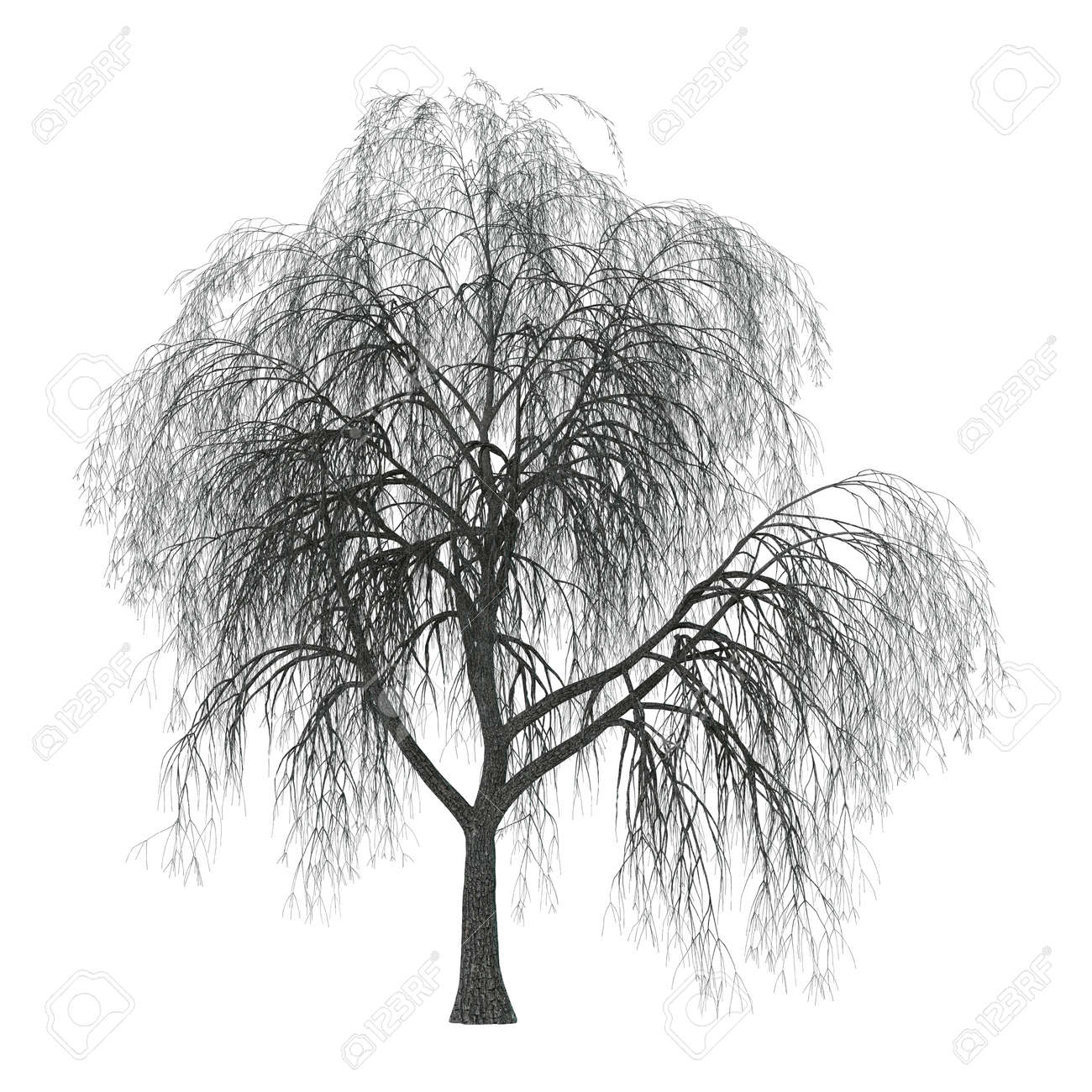hight resolution of 3d illustration of a weeping willow or sallow or osier isolated on white background stock photo