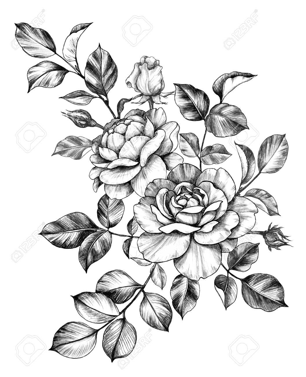 Rose Leaf Drawing : drawing, Flower, Drawing, Wallpaper